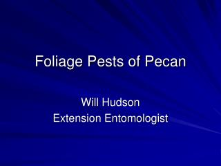 Foliage Pests of Pecan