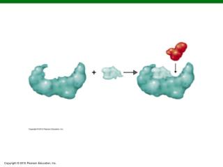 The Mechanism of Enzymatic Action