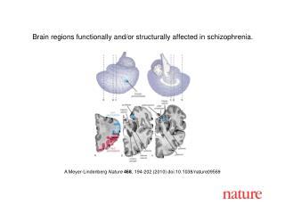A Meyer-Lindenberg  Nature 468 , 194-202 (2010) doi:10.1038/nature09569