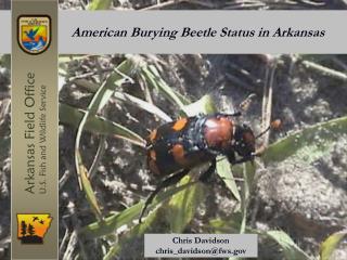 American Burying Beetle Status in Arkansas