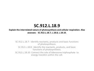 SC.912.L.18.7:  Identify reactants, products and basic functions of photosynthesis.