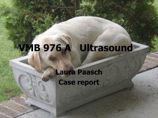 VMB 976 A   Ultrasound