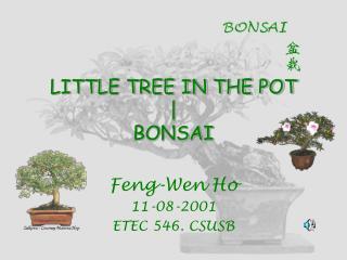 LITTLE TREE IN THE POT | BONSAI