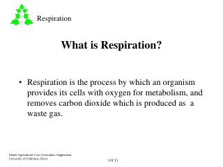 What is Respiration?