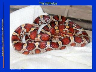 The stimulus