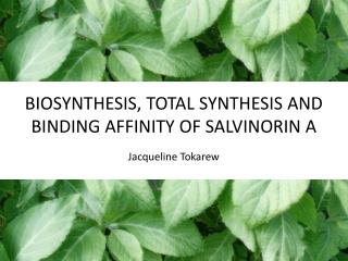 BIOSYNTHESIS, TOTAL SYNTHESIS AND BINDING AFFINITY OF SALVINORIN A