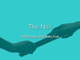 The Nail