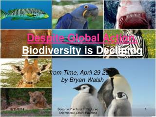 Despite Global Action,  Biodiversity is Declining  from Time, April 29 2010  by Bryan Walsh