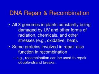 DNA Repair  Recombination