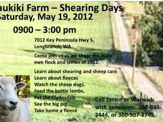 Kaukiki Farm – Shearing Days