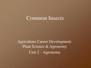 Common Insects