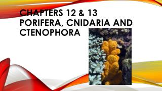 CHAPTERs 12 & 13 PORIFERA, CNIDARIA AND CTENOPHORA