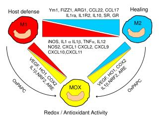 iNOS, IL1  ?  IL1 ?, TNF?, IL12  NOS2, CXCL1 CXCL2, CXCL9 CXCL10,CXCL11