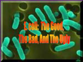E. coli:  The Good,  The Bad, And The Ugly