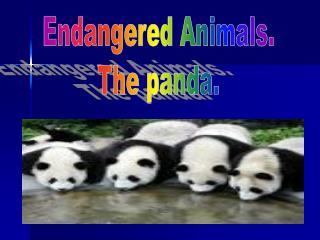 Endangered Animals. The panda.
