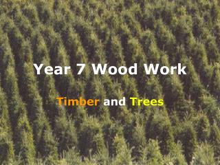 Year 7 Wood Work