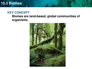 KEY CONCEPT  Biomes are land-based, global communities of organisms.