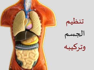 تنظيم  الجسم  وتركيبه