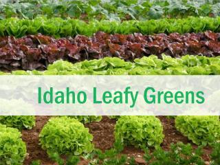 Idaho  Leafy Greens