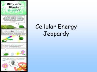 Cellular Energy Jeopardy