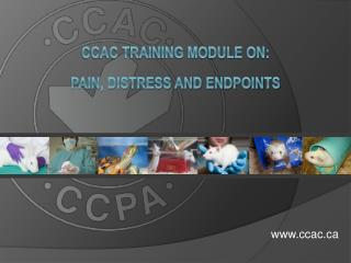 CCAC Training Module on:   Pain, distress and endpoints