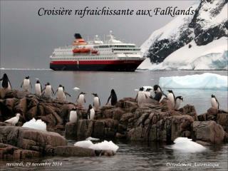 Croisière rafraichissante aux Falklands