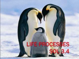 Life Processes        SOL 3.4