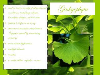 Ginkgophyta