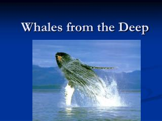 Whales from the Deep