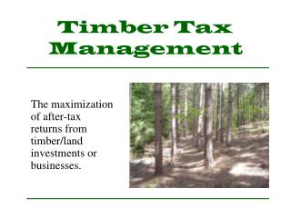 Timber Tax Management