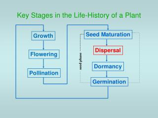 Key Stages in the Life-History of a Plant