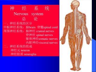 神      经      系     统 Nervous   system 总       论 一、神经系统的区分 中枢神经系统:脑 brain   脊髓 spinal cord
