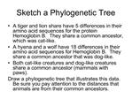 Sketch a Phylogenetic Tree