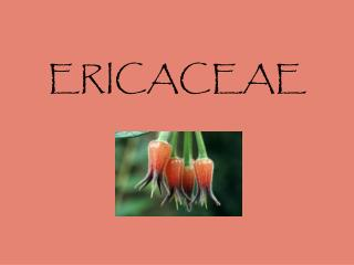 ERICACEAE