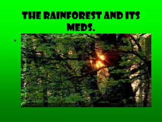 The Rainforest and its meds.
