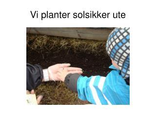 Vi planter solsikker ute