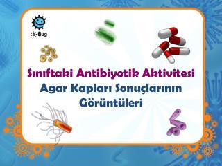 Sınıftaki Antibiyotik Aktivitesi Agar Kapları Sonuçlarının Görüntüleri