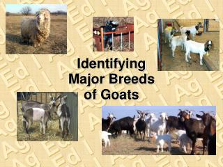 Identifying Major Breeds of Goats