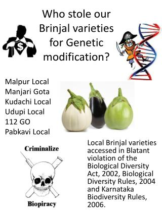 Who stole our  Brinjal  varieties for Genetic modification?