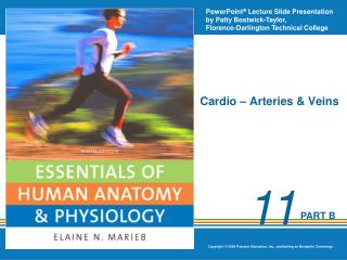 Cardio – Arteries & Veins