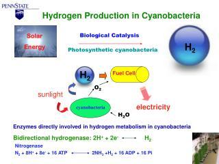 Nitrogenase N 2  + 8H +  + 8e -  + 16 ATP                  2NH 3  +H 2  + 16 ADP + 16 Pi