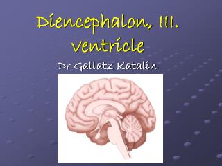 Diencephalon, III. ventricle Dr Gallatz Katalin