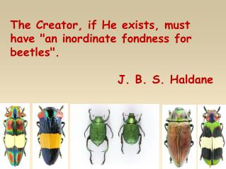 "The Creator, if He exists, must have ""an inordinate fondness for beetles"". J. B. S. Haldane"