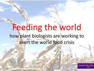 Feeding the world how plant biologists are working to avert the world food crisis