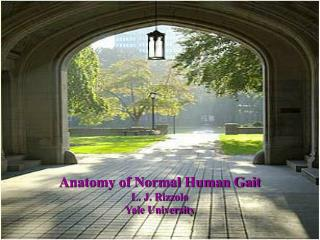 Anatomy of Normal Human Gait L. J. Rizzolo Yale University