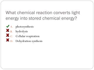 What chemical reaction converts light energy into stored chemical energy?