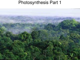 Photosynthesis Part 1