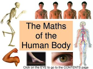 The Maths  of the  Human Body