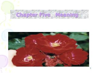 Chapter Five   Meaning