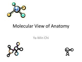 Molecular View of Anatomy